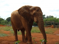 02_brazil-belhina-babu-and-chocolate-brasilia-zoo-021