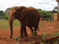 16_brazil-belhina-babu-and-chocolate-brasilia-zoo-017