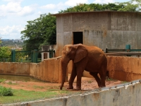 17_brazil-belhina-babu-and-chocolate-brasilia-zoo-294