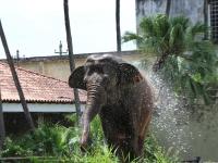 12_carla-and-koala-rio-zoo-454