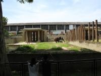 1_carla-and-koala-rio-zoo-032