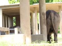 4_carla-and-koala-rio-zoo-207