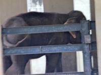 5_carla-and-koala-rio-zoo-137