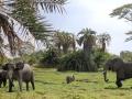 Elefantes no pântano no Parque Nacional do Amboseli, Quênia