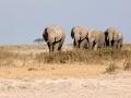 Familia de elefantes cruzando o deserto no Parque Nacional do Amboseli, Quênia