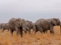 Familia de elefantes no Parque Nacional do Amboseli, Quênia