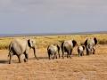 Familia de elefantes saindo do pântano no Parque Nacional do Amboseli, Quênia
