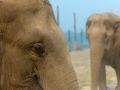 Elefantes na Tailandia