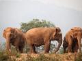 Elefantes na encosta, Tailandia