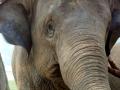 Elefante com seu tratador na Tailandia