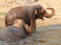Elefantes no rio, Tailandia