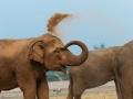 Elefante jogando poeira, Tailandia