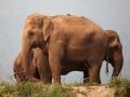 Elefantes passeando pela encosta do rio, Tailandia