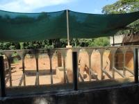 01_brazil-teresita-serva-and-hangun-sao-paulo-zoo-081