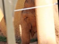 04_brazil-teresita-serva-and-hangun-sao-paulo-zoo-089