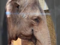 05_brazil-teresita-serva-and-hangun-sao-paulo-zoo-006