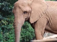 09_brazil-teresita-serva-and-hangun-sao-paulo-zoo-306
