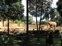 11_brazil-teresita-serva-and-hangun-sao-paulo-zoo-218