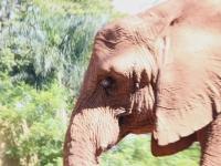 12_brazil-teresita-serva-and-hangun-sao-paulo-zoo-144