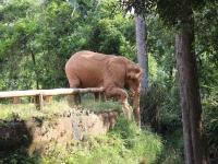 13_brazil-teresita-serva-and-hangun-sao-paulo-zoo-211