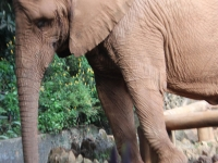 14_brazil-teresita-serva-and-hangun-sao-paulo-zoo-309