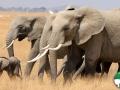 Wallpaper Santuario de Elefantes 1
