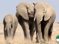 Wallpaper Santuario de Elefantes 3