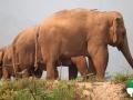 Wallpaper Santuario de Elefantes 4