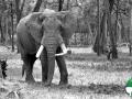 Wallpaper Santuario de Elefantes 5