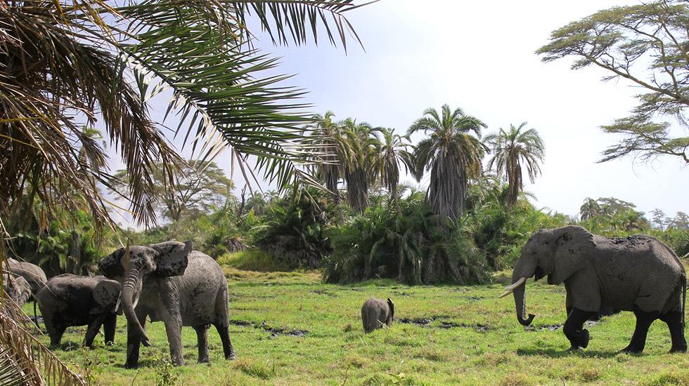 Aspectos físicos Santuário de elefantes