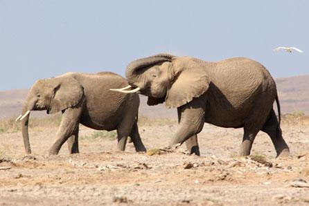 Elefantes africanos santuário