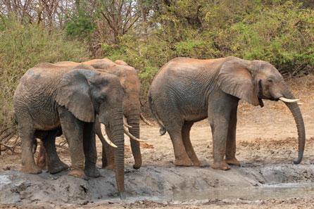 Santuário - Elefantes africanos