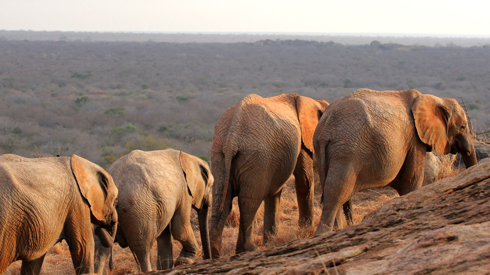 Elefantes santuário