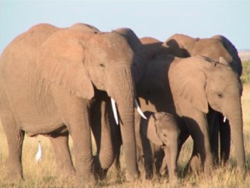 mente e movimento - família de elefantes