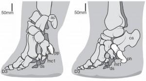 patas elefantes