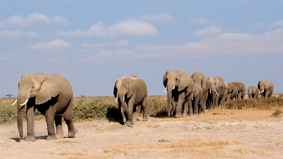 foto manada de elefantes