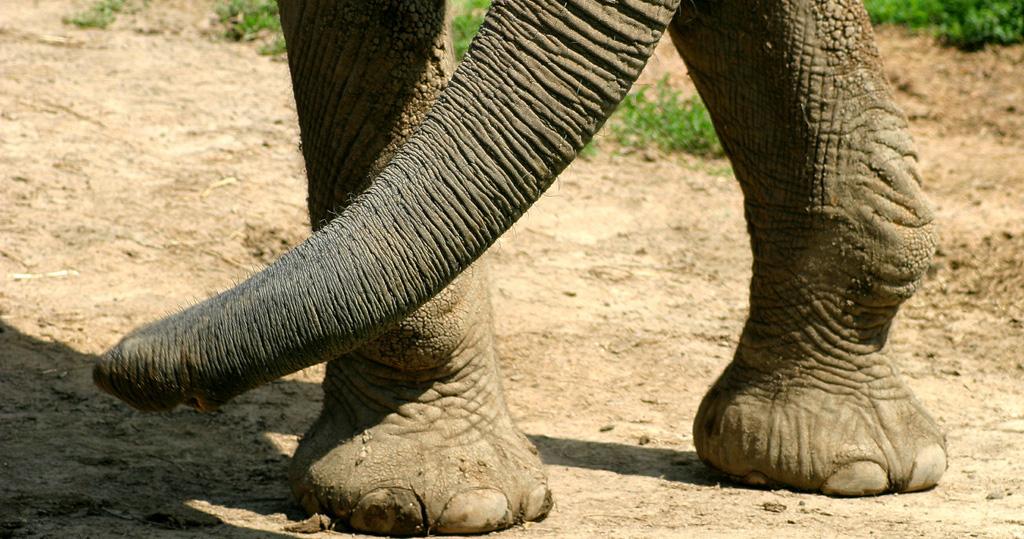 Biodiversidade na pata dos elefantes