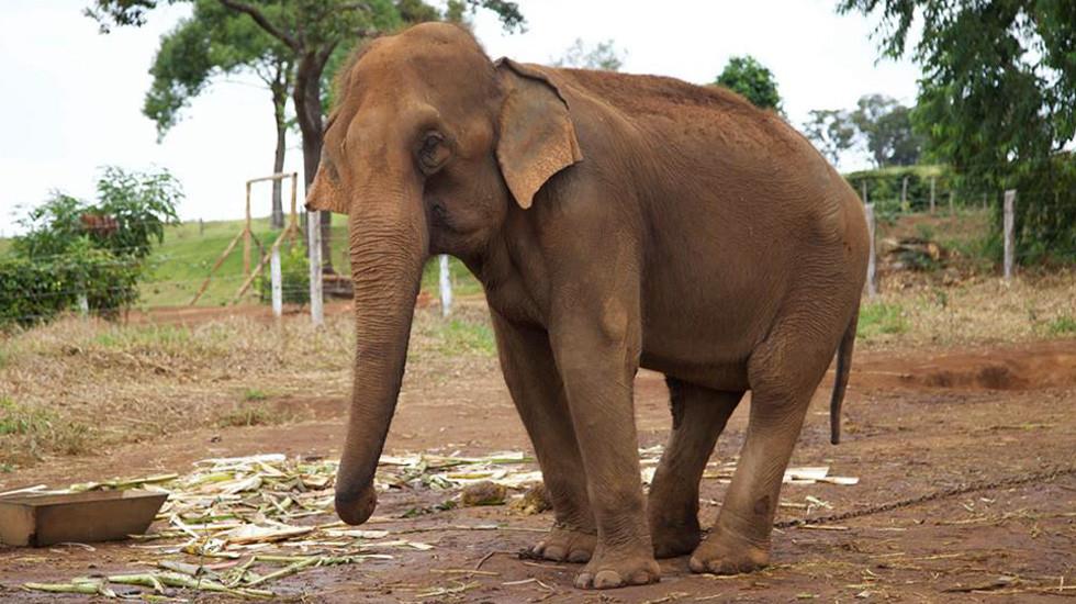 Sema licencia Santuário de Elefantes - foto destaque