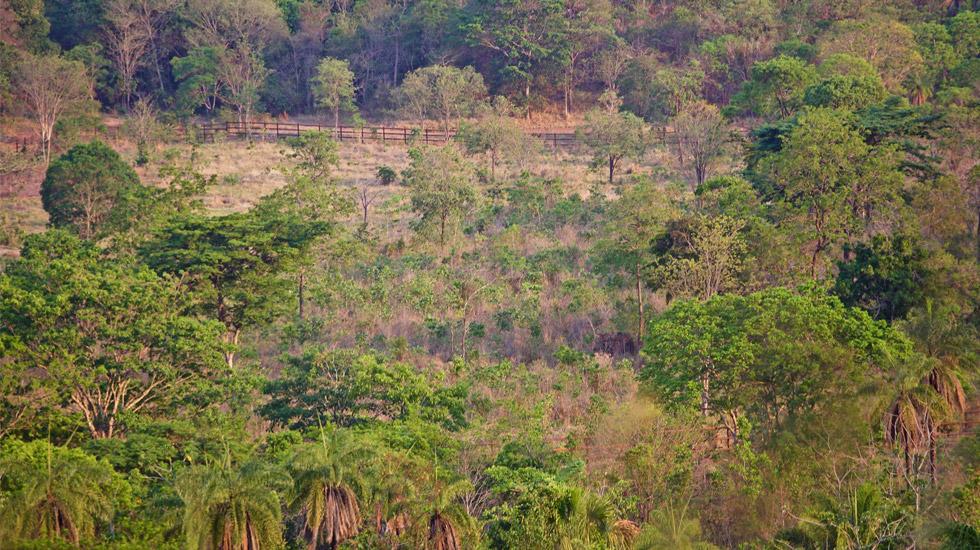 Maia e Guida no Santuário de Elefantes Brasil