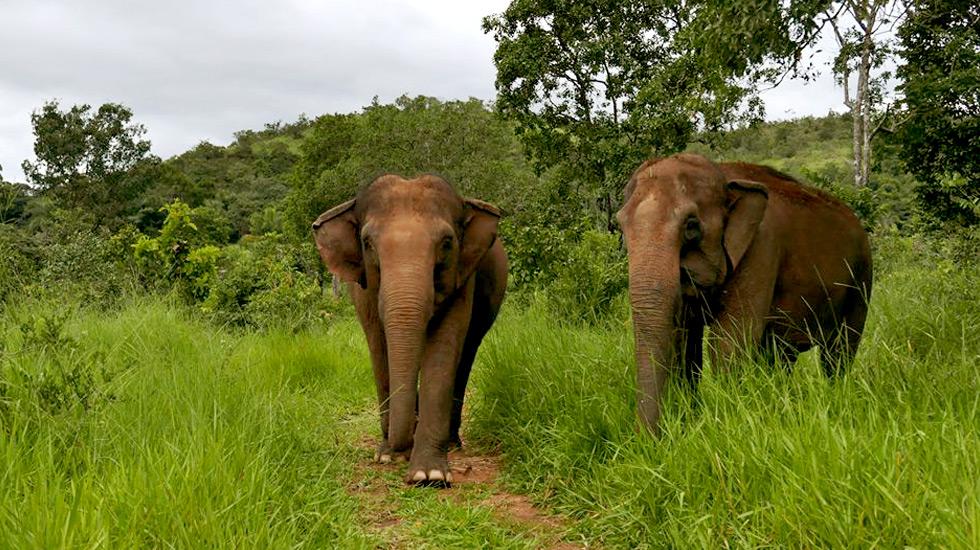 Maia e Guida caminham livremente por uma área de 29 hectares repleta de palmeiras e árvores típicas do Cerrado
