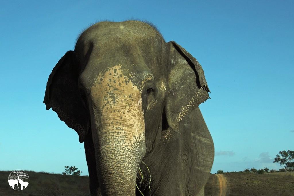 Rana vive atualmante no zoológico da Fazenda Boa Luz próxima a Aracaju (SE)