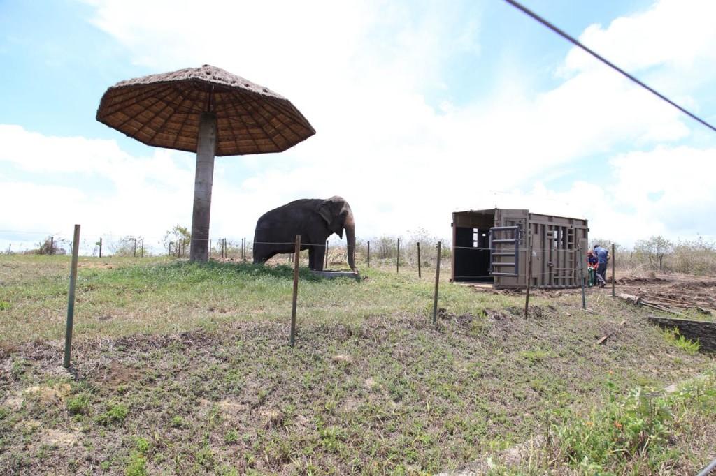 Rana vive desde 2012 no zoológico do hotel fazenda após uma vida inteira de adestramento forçado para exploração em espetáculos circenses
