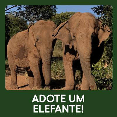 Adote um Elefante!